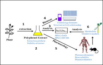 Figure 1. Summary of different aspects of my polyphenol research.