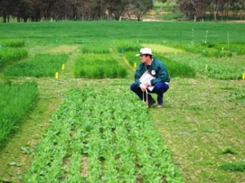 Man squatting and inspecting a trial plot