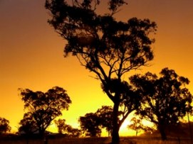 Tree silhouetted by a yellow sunset