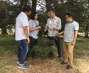 Dr Syed Rizvi, Ms Annie Johnson, Professor Geoff Gurr and Dr Ahsanul Haque examine native vegetation for natural enemies of vegetable pests