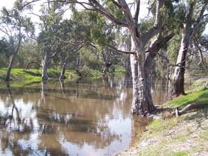 Wakool River