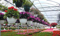 Photo of nursery greenhouse
