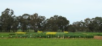2014-Graham-Centre-Crop-and-Pasture-Systems-Field-Forum-will-focus-on-farming-with-stubble-and-livestock-and-the-feedbase