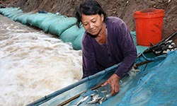 Fishways show the way in Mekong basin