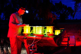 Setting light traps for night monitoring