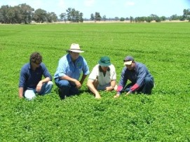 Four people investigating a crop