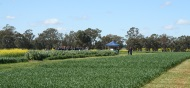 livestock-and-the-feedbase-and-stubble-management-weeds-pests-and-dieseases-were-key-topics-of-dicsussion-at-the-Graham-Centre-Crop-and-Pasture-Systems-Field-Forum