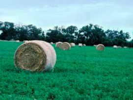 Round bales of hay in a green paddock