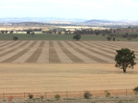 View of summer landscape with cropped paddocks