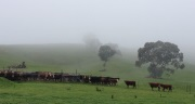 Registrations-are-not-open-for-the-Graham-Centre-2014-Beef-Forum
