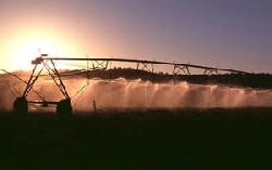 irrigation sprays