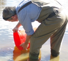Mr Luke Pearch releasing southern pygmy perch