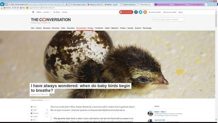 Conversation article on baby birds breathing