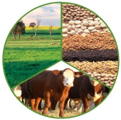 The-Graham-Centre-will-facilitate-an-industry-wide-forum-Future-proofing-mixed-farming-systems-on-21-22-August-identifying-critial-drivers-of-mixed-farming-systems-viability-and-sustainablity-and-develop-recommendations-for-the-Centre-indsutry-and-government-to-address-those-drivers